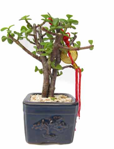 מיני עץ הכסף